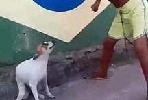 Sjov med hunde