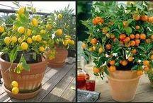 bitkiler bölümü
