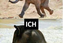 lustige Tierbilder