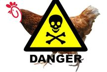 Food Poisoning / Anti-GMO and other chemicals in food / by Tarrah Vanderlan