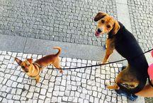 My babies / Biggy & Leão