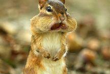 Animals / by Barbara Bailey
