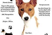 Basenji / Love my dog