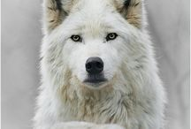 ;;Wolves don't lose sleep over the opinion of sheep