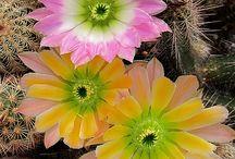 """Le mie piante """"succulente"""" / """"Nell'intimo della natura riscopriamo il nostro io più profondo."""" (Anonimo)"""