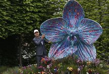 Chelsea Flower Show / by Virginia Nichols