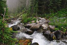 Lasy i strumienie