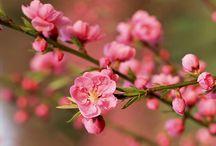 Flower power / Beautifull flowers