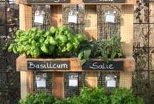kruidenrek/groentetuin