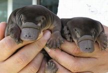 baby aminals! squeee!!! / by Suzanne Tildsley