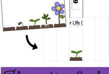 plantas ciclo de vida