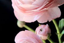 Mes fleurs préférées