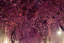 beautifull world
