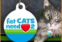Aw Paws - Cat ID Tags / www.AwPaws.com