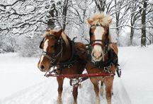 Horse-drawn Sleighride
