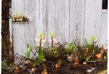 Gartenideen im Frühling