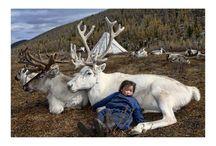 Reindeer Spirit / by Suzanne West