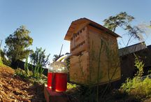 GGN: Bees + Butterflies