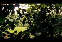 Tongues (YouTube) / Documentation of the waypoints (lakes and rivers in Quebec for the most part) for the Tongue Rug project: a virtual sladdakavring. ++ Documentation des points de repère (lacs et rivières pour la majorité au Québec) pour le projet Tapis à langues : un sladdakavring virtuel.