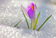 Beautiful flowers in the snow!!!!!