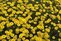 květiny názvy