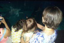 All'Acquario di Genova con Sammy&Co. / Il 13 giugno 2015 abbiamo passato una bellissima giornata all'Acquario di Genova assieme a due tartarughe marine: Ricky e Ella, i protagonisti di Sammy&Co.2 (http://www.eaglepictures.com/home-entertainment/fiction-serie-tv/sammy-co-vol2-una-vita-tra-gli-scogli). L'Acquario è un luogo di ricerca, tutela e preservazione di alcune specie (come le tartarughe) che vengono monitorate, curate se ferite o malate e, soprattutto, sono messe nelle condizioni di riprodursi se sono a rischio di estinzione.