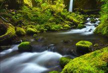 wonder of Natur