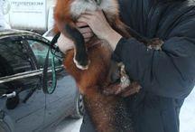 [ animals | Foxes ]