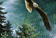 águias
