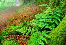 """""""Hahai no ka ua i ka ulula'au"""" - the rain follows after the forest"""