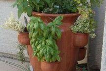 vasos plantas aromáticas