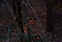 ControBosco / Scatti di un tramonto invernale senza neve