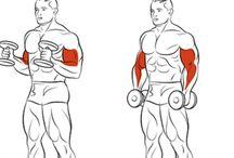 fitko biceps