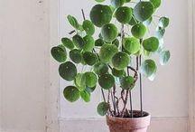 Non solo succulente