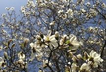 Flowerpower  / Bloemen