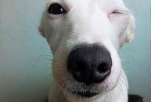 cachorro sorridente