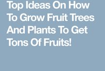 Fruit Tree Ideas