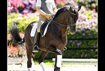 World Of Dressage Rider