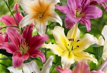 Beautiful blooms / Colourful flowers