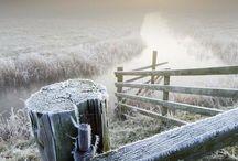 vinter / frost