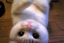 Too cute / by Sherry Cook Jones