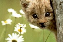 Animals / Cute, funny, or awesome