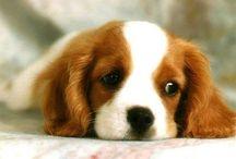 Chien / J'adore les chiens