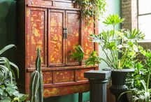 Houseplants! / all things green and growing. urban jungle, and indoor garden. ideas for using plants in design.