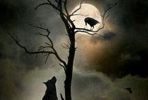 Crow/Raven/black bird