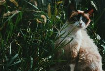 Fotografando animais