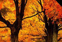 Őszi csodás pillanatok