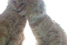 Bettie & Mollie / My cats