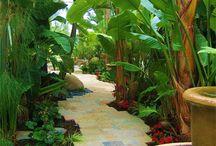 backyard jungle