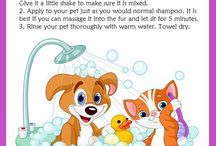 fleas remedies for dogs